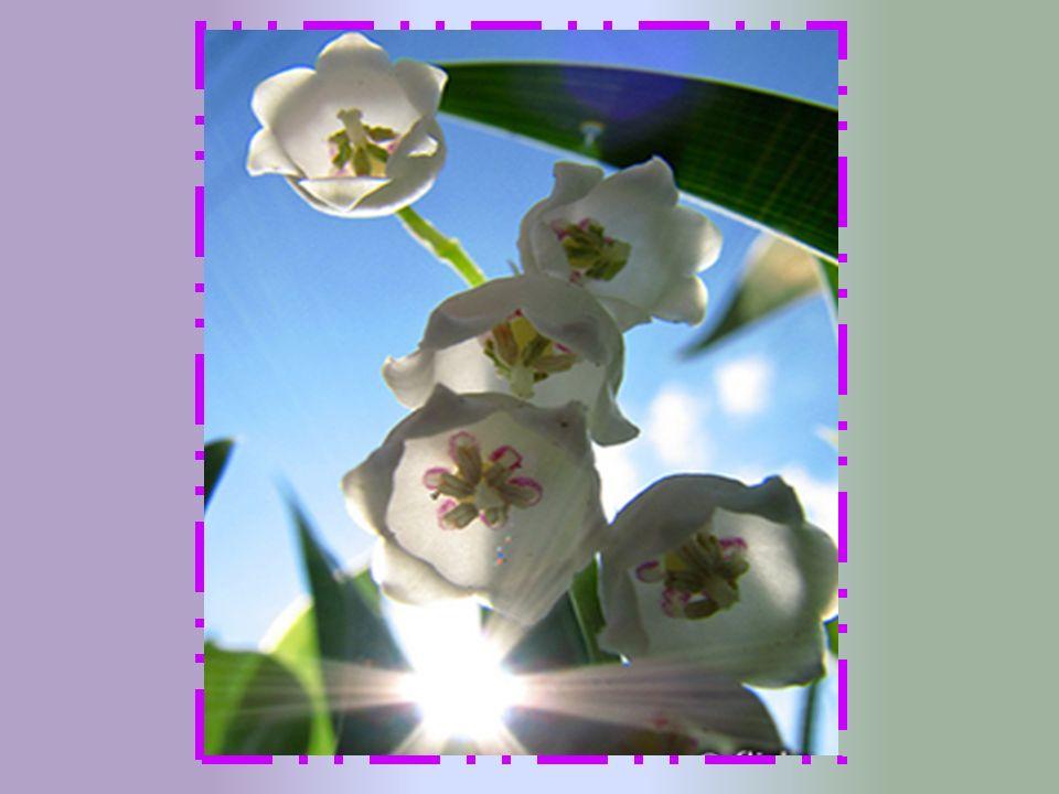 Mais c est au début du XX siècle que sa vocation de fleur du Premier Mai s affirme, grâce à deux faits principaux.