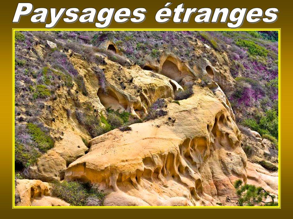 Nevada, USA – The Black Rock Desert (le lit dun lac asséché)