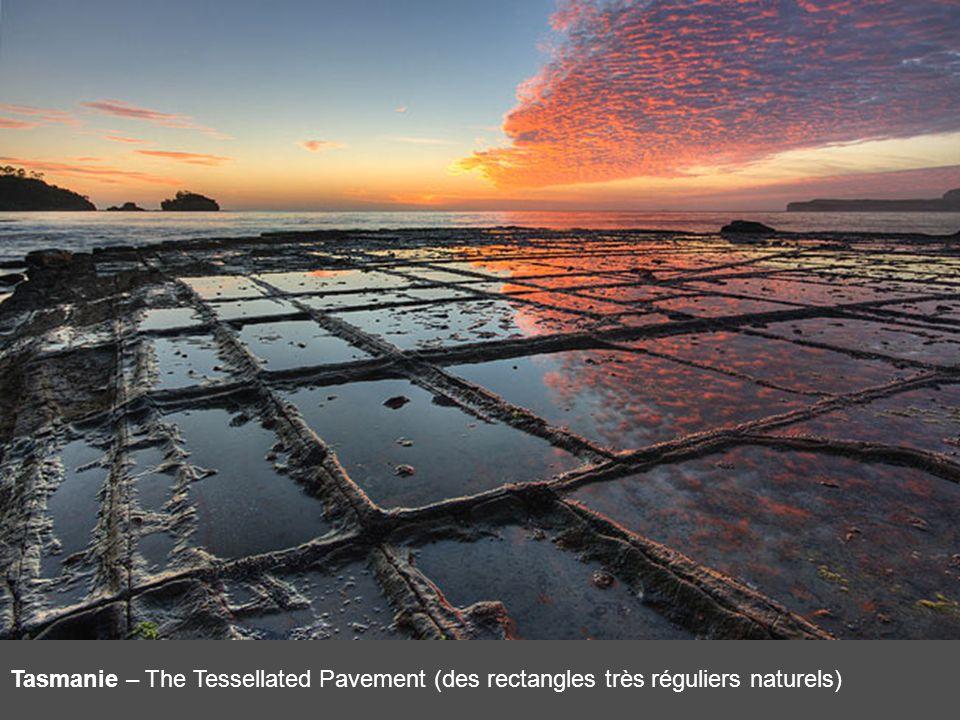 Tasmanie – The Tessellated Pavement (des rectangles très réguliers naturels)