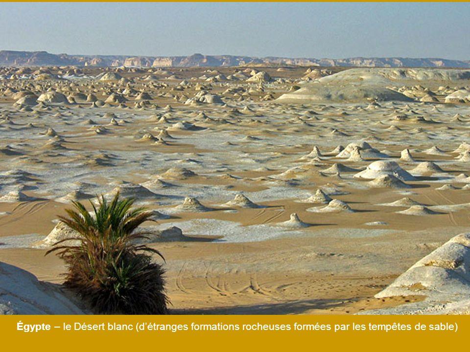 Égypte – le Désert blanc (détranges formations rocheuses formées par les tempêtes de sable)