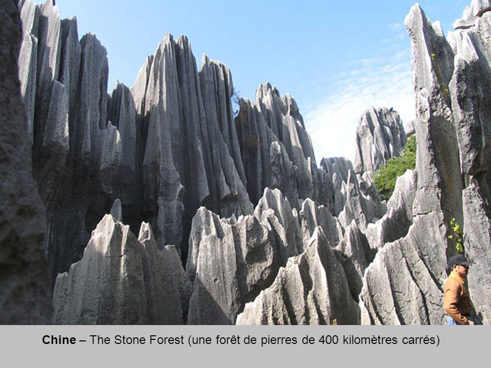 Chine – The Stone Forest (une forêt de pierres de 400 kilomètres carrés)