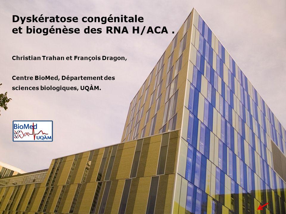 Dyskératose congénitale et biogénèse des RNA H/ACA. Christian Trahan et François Dragon, Centre BioMed, Département des sciences biologiques, UQÀM.