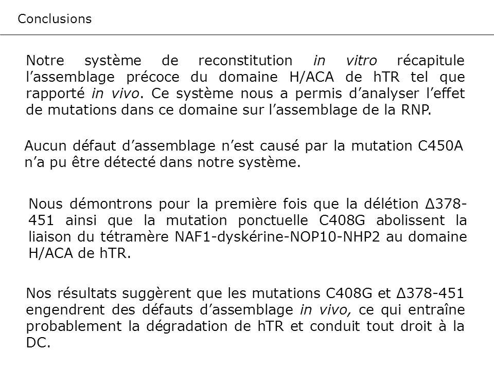 Conclusions Notre système de reconstitution in vitro récapitule lassemblage précoce du domaine H/ACA de hTR tel que rapporté in vivo. Ce système nous