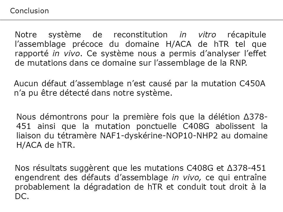 Conclusion Notre système de reconstitution in vitro récapitule lassemblage précoce du domaine H/ACA de hTR tel que rapporté in vivo. Ce système nous a