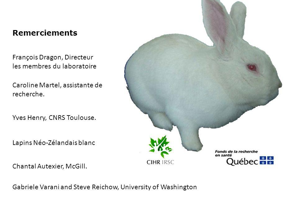 Remerciements François Dragon, Directeur les membres du laboratoire Yves Henry, CNRS Toulouse. Lapins Néo-Zélandais blanc Caroline Martel, assistante