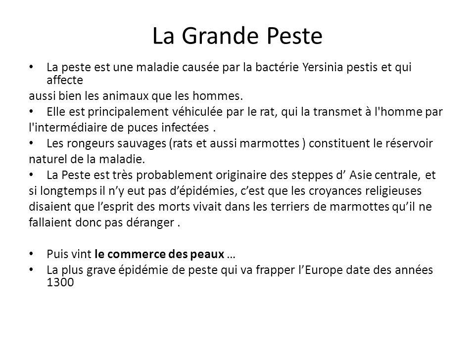 La Grande Peste La peste est une maladie causée par la bactérie Yersinia pestis et qui affecte aussi bien les animaux que les hommes.