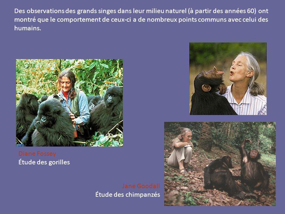 Des observations des grands singes dans leur milieu naturel (à partir des années 60) ont montré que le comportement de ceux-ci a de nombreux points co