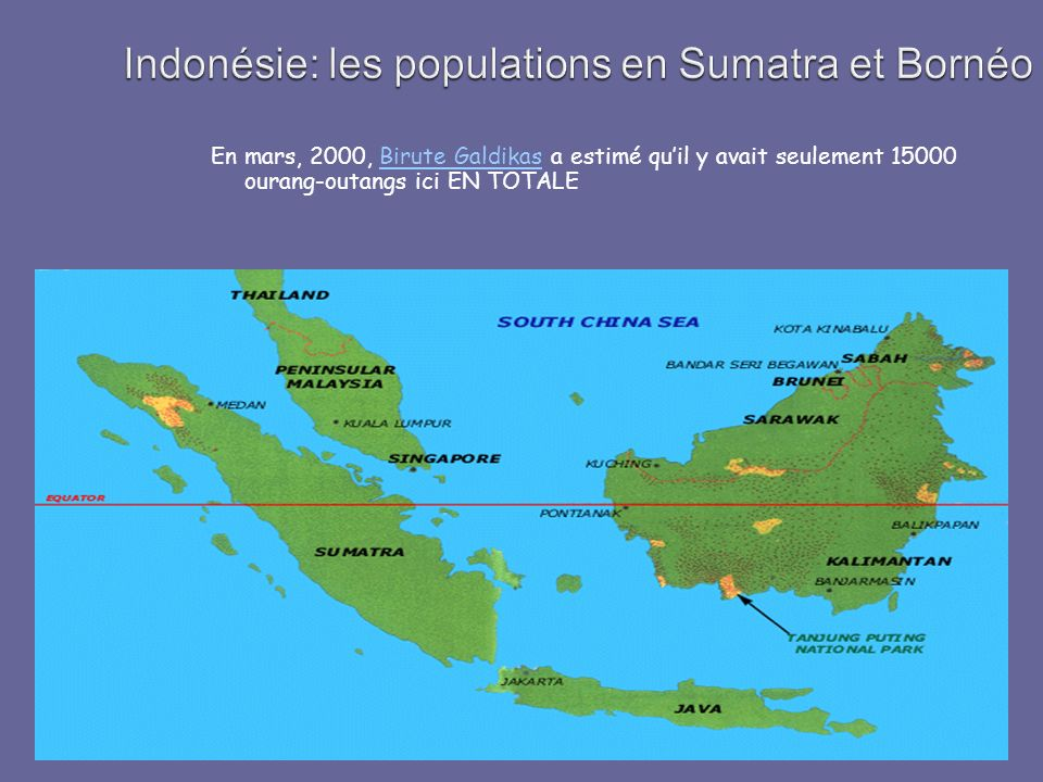 En mars, 2000, Birute Galdikas a estimé quil y avait seulement 15000 ourang-outangs ici EN TOTALEBirute Galdikas