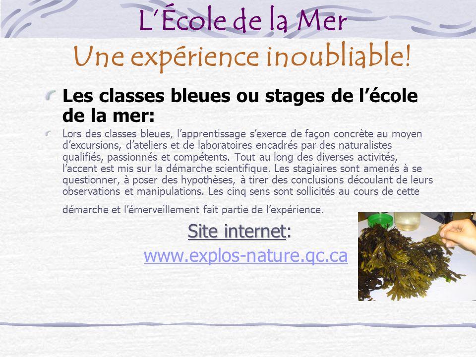 Hébergement Les classes bleues ou stages de lÉcole de la mer se déroulent dans la région des Bergeronnes située à 22 Km à lest de Tadoussac.