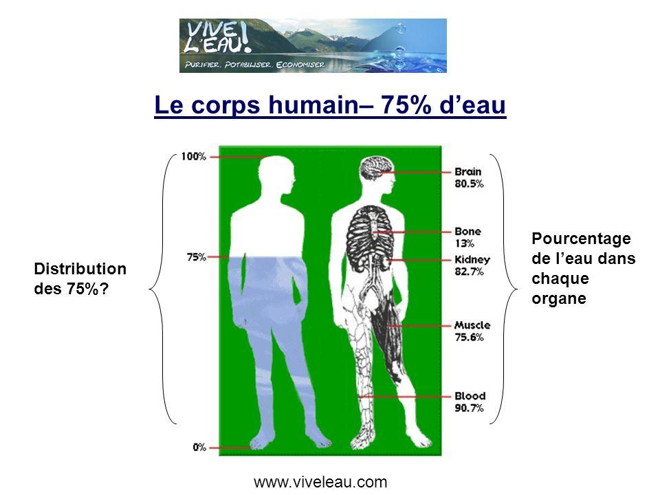 Le corps humain– 75% deau Pourcentage de leau dans chaque organe Distribution des 75%.