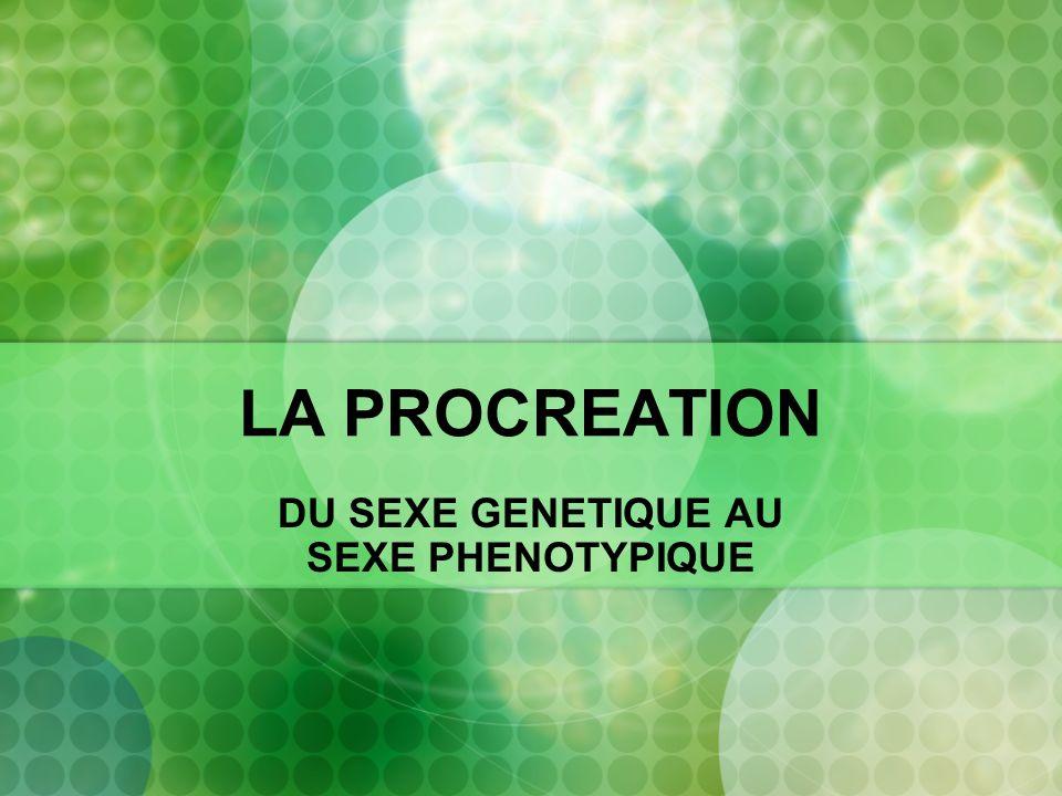 LA PROCREATION DU SEXE GENETIQUE AU SEXE PHENOTYPIQUE