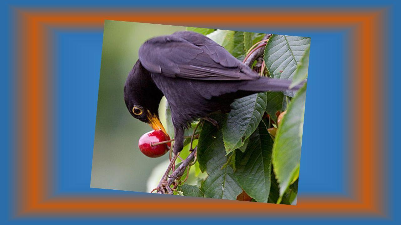 Le vieil arbre empli de tendresse Se prête au jeu des passereaux Sachant avec délicatesse Faire le bonheur des oiseaux.