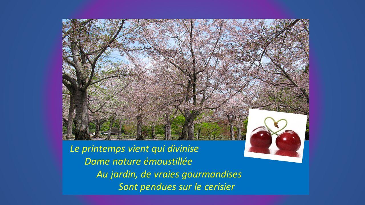 Le printemps vient qui divinise Dame nature émoustillée Au jardin, de vraies gourmandises Sont pendues sur le cerisier