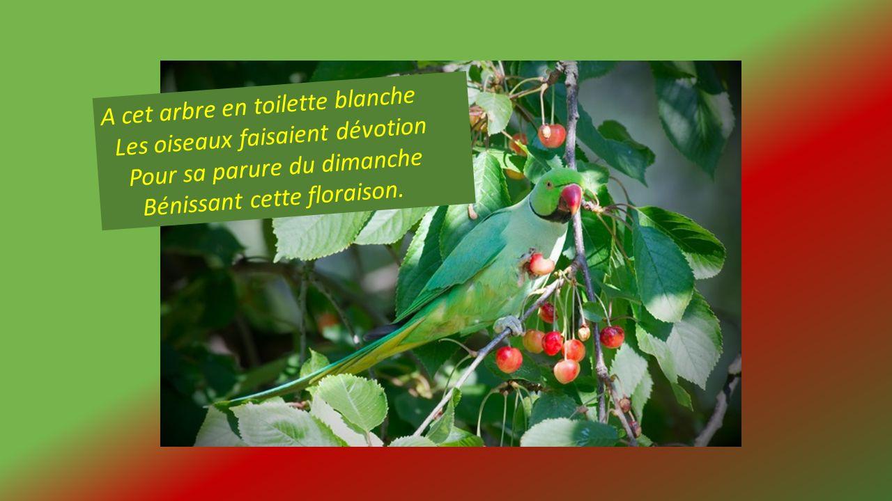 A cet arbre en toilette blanche Les oiseaux faisaient dévotion Pour sa parure du dimanche Bénissant cette floraison.