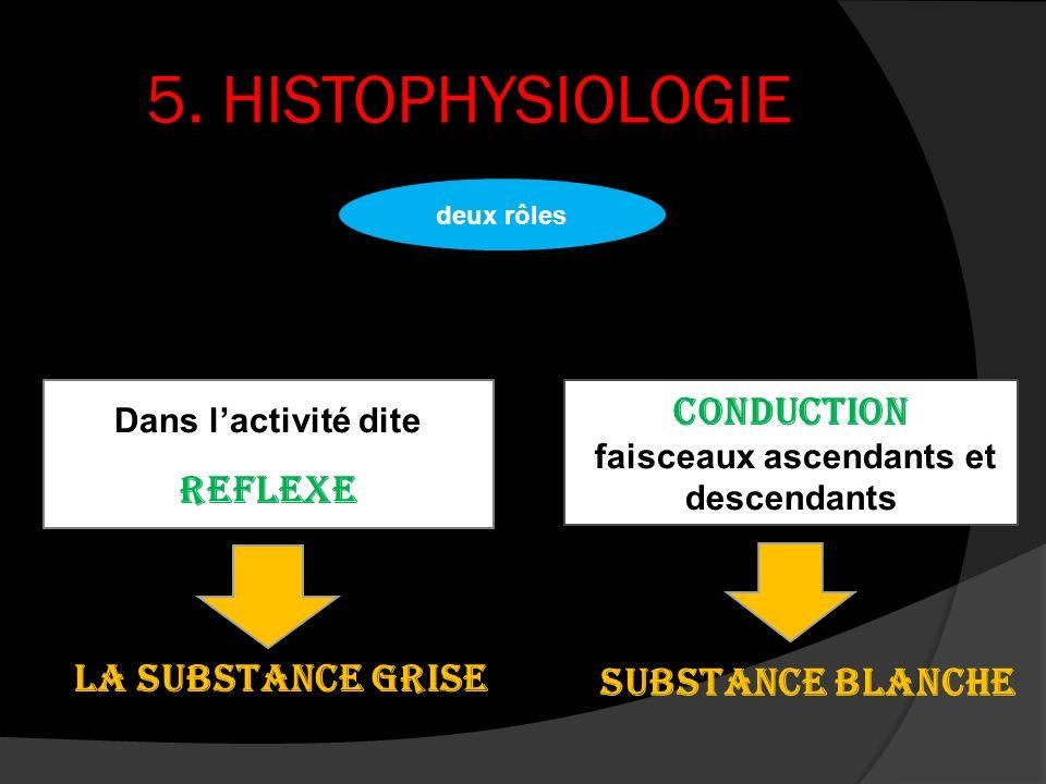 5. HISTOPHYSIOLOGIE Dans lactivité dite reflexe Conduction faisceaux ascendants et descendants deux rôles la substance grise substance blanche