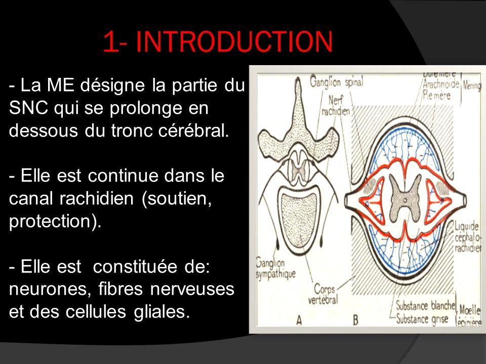 1- INTRODUCTION - La ME désigne la partie du SNC qui se prolonge en dessous du tronc cérébral. - Elle est continue dans le canal rachidien (soutien, p