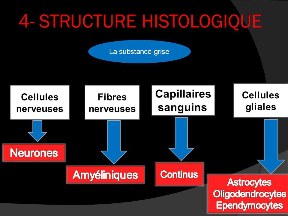 4- STRUCTURE HISTOLOGIQUE Capillaires sanguins La substance grise Fibres nerveuses Cellules nerveuses Cellules gliales