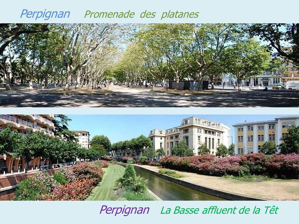 Place centre ville Perpignan ruelle centre ville