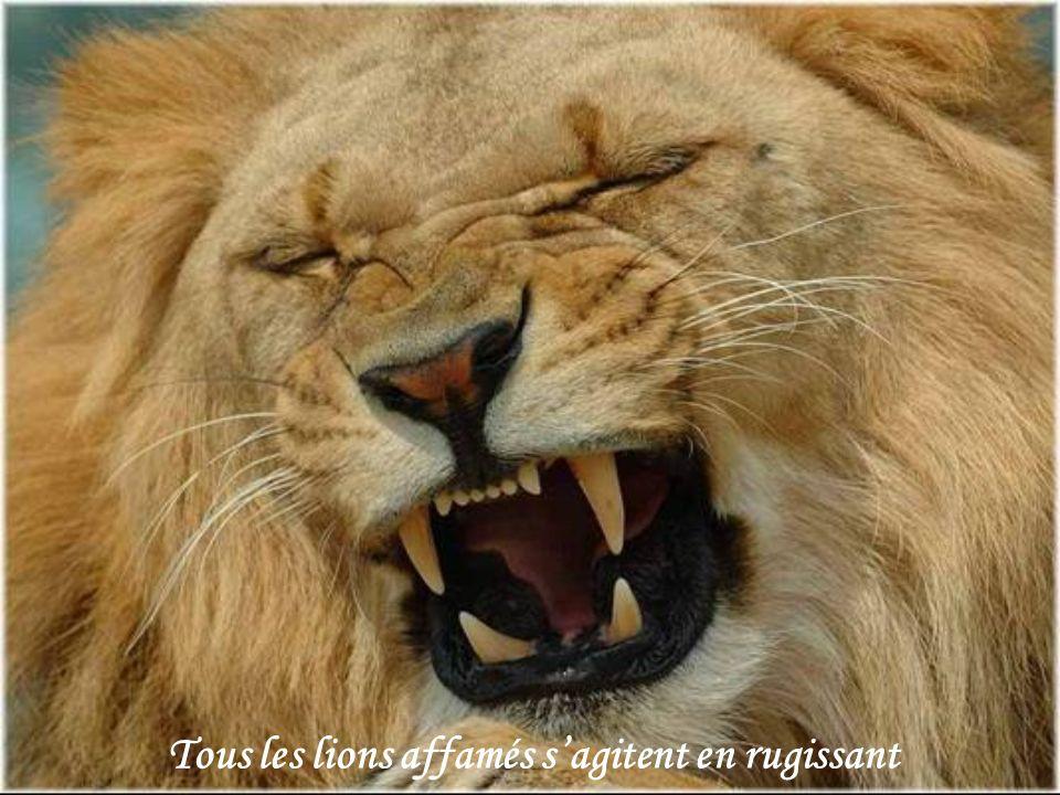 Tous les lions affamés sagitent en rugissant