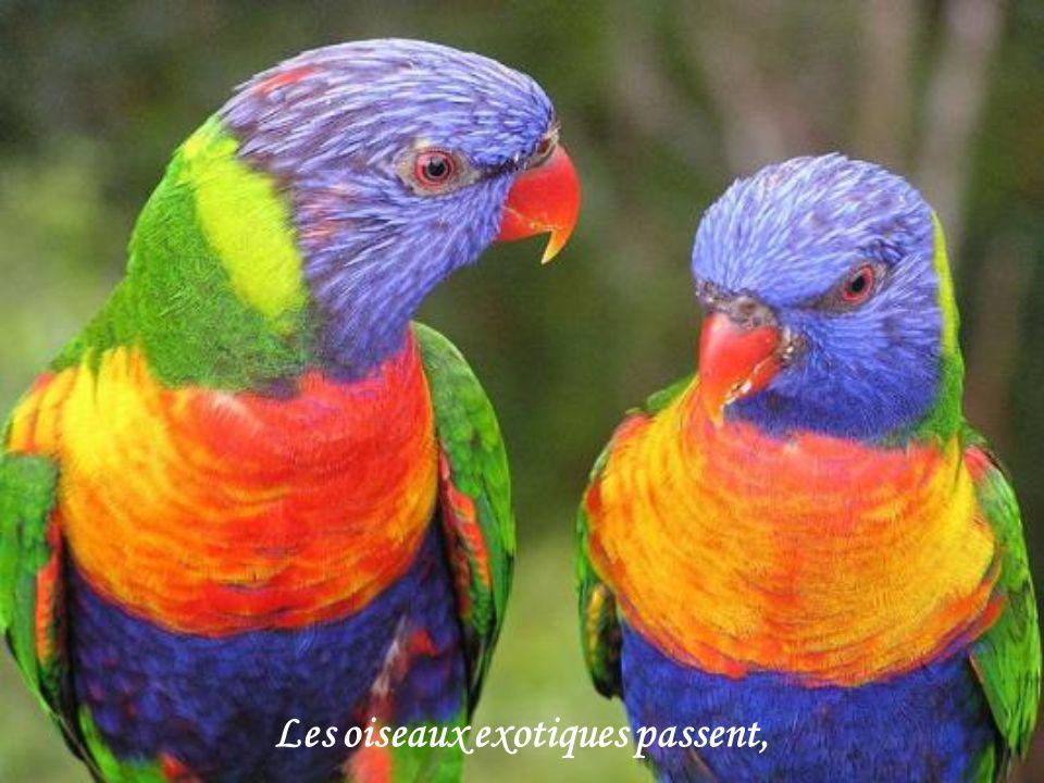 Les oiseaux exotiques passent,