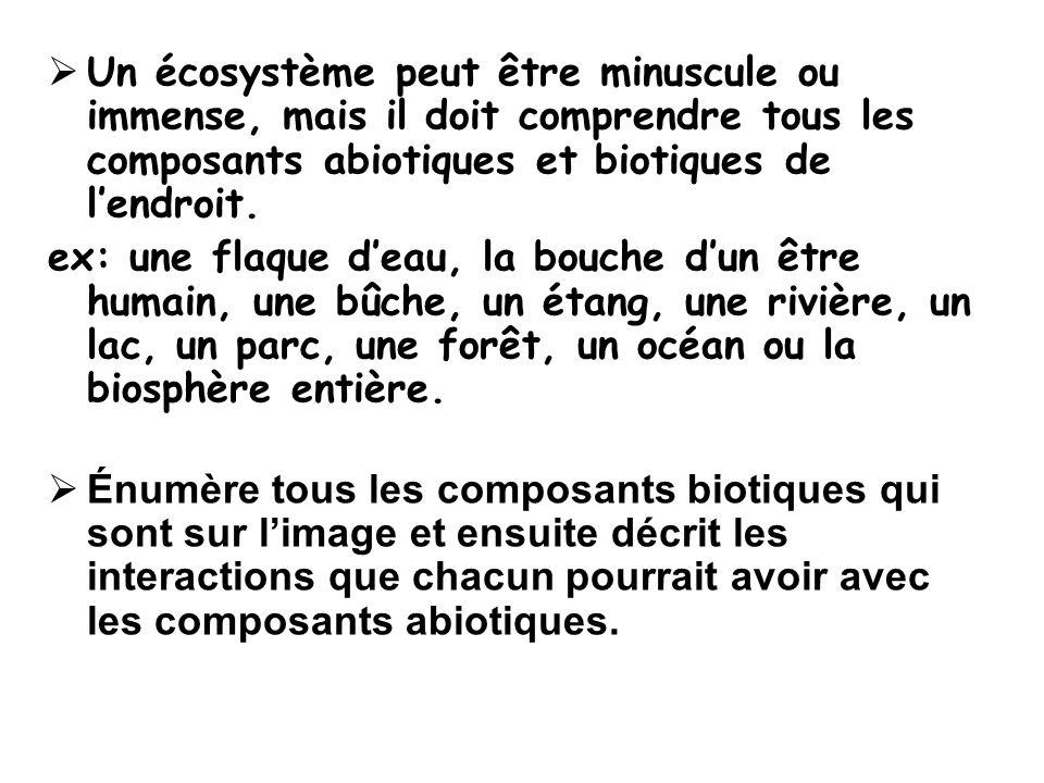 Les niveaux dorganisation biologique i.un Individu ii.une Population iii.une Communauté iv.un Écosystème v.un Biome