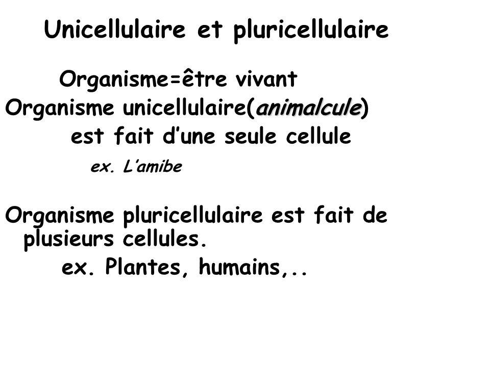 Unicellulaire et pluricellulaire Organisme=être vivant Organisme unicellulaire(animalcule) est fait dune seule cellule ex.
