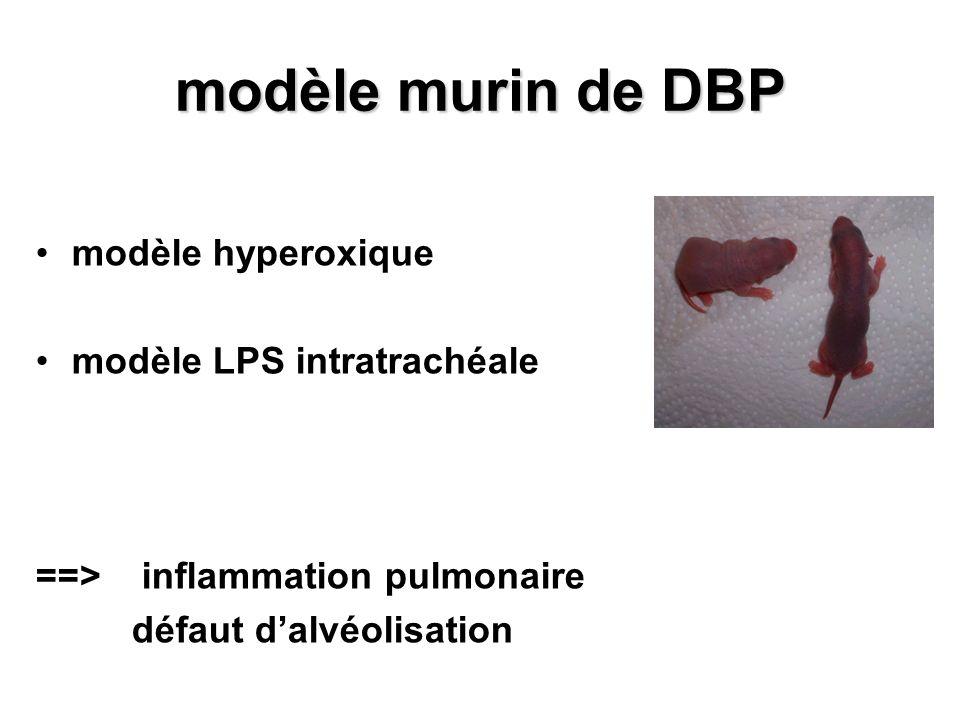 modèle murin de DBP modèle hyperoxique modèle LPS intratrachéale ==> inflammation pulmonaire défaut dalvéolisation