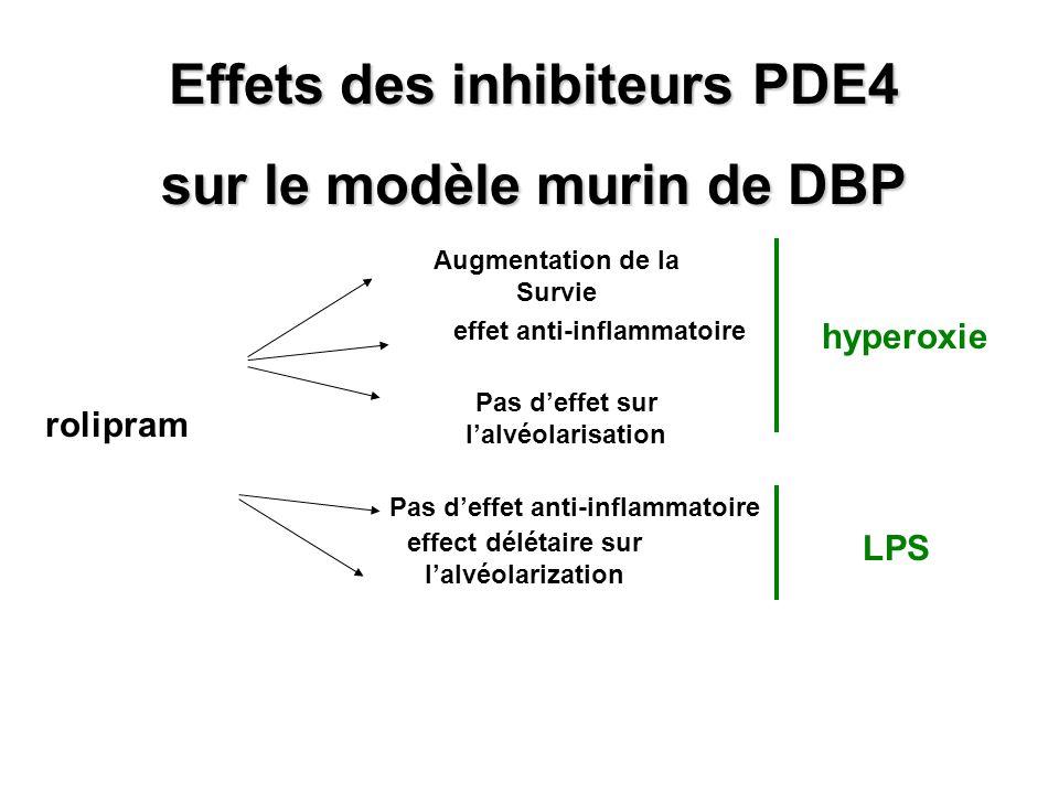 Effets des inhibiteurs PDE4 sur le modèle murin de DBP rolipram Augmentation de la Survie effet anti-inflammatoire Pas deffet sur lalvéolarisation hyp