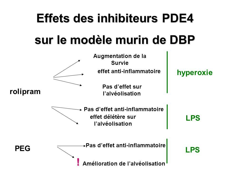 Effets des inhibiteurs PDE4 sur le modèle murin de DBP rolipram Augmentation de la Survie effet anti-inflammatoire Pas deffet sur lalvéolisation hyper