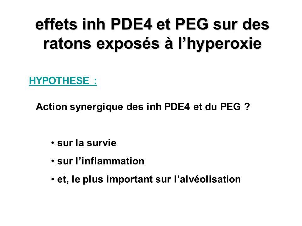 effets inh PDE4 et PEG sur des ratons exposés à lhyperoxie HYPOTHESE : Action synergique des inh PDE4 et du PEG ? sur la survie sur linflammation et,