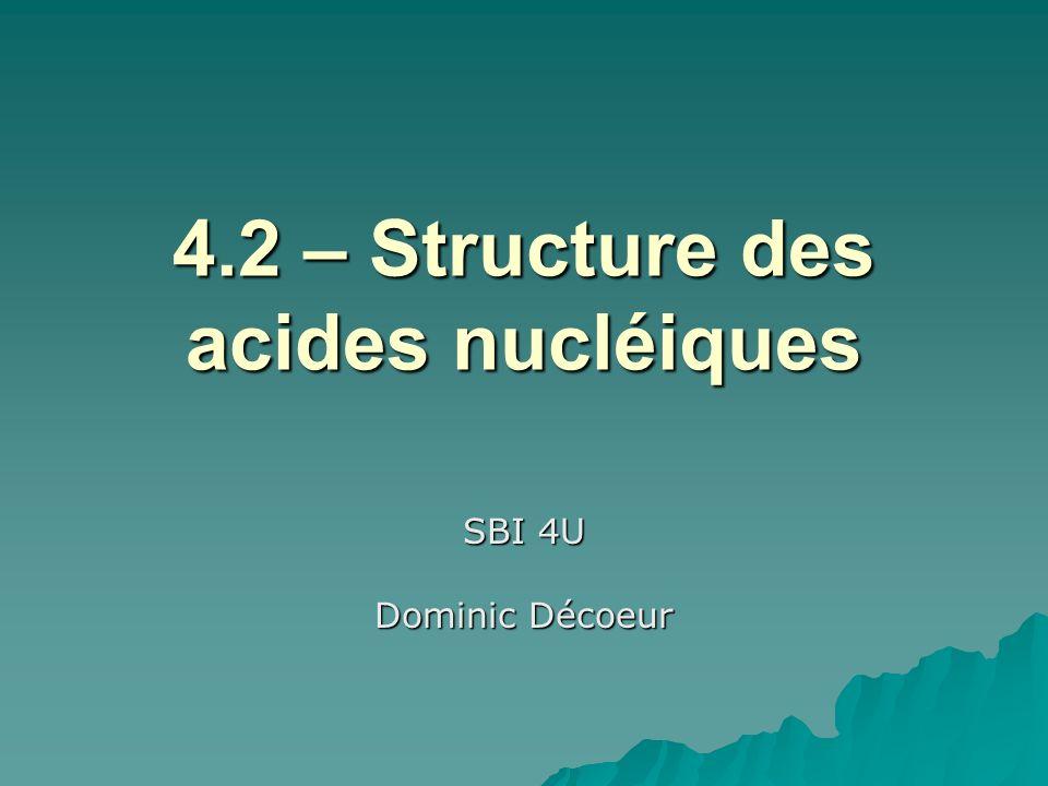 4.2 – Structure des acides nucléiques SBI 4U Dominic Décoeur