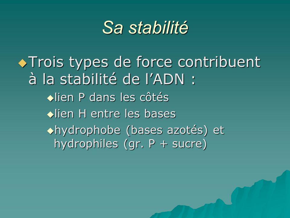 Sa stabilité Trois types de force contribuent à la stabilité de lADN : Trois types de force contribuent à la stabilité de lADN : lien P dans les côtés lien P dans les côtés lien H entre les bases lien H entre les bases hydrophobe (bases azotés) et hydrophiles (gr.