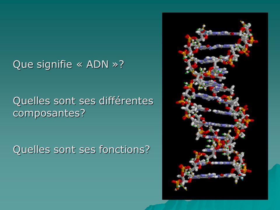 Que signifie « ADN »? Quelles sont ses différentes composantes? Quelles sont ses fonctions?