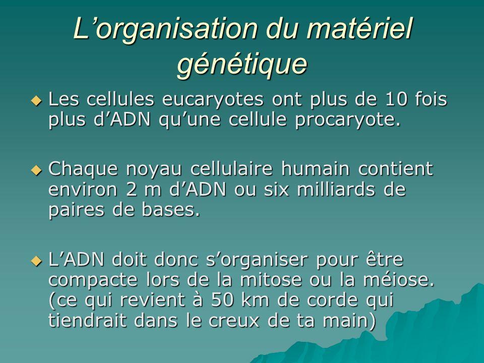 Lorganisation du matériel génétique Les cellules eucaryotes ont plus de 10 fois plus dADN quune cellule procaryote.