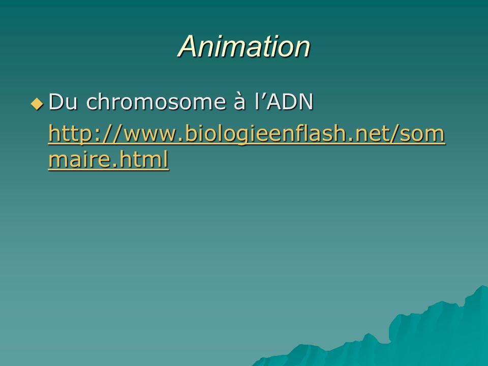 Animation Du chromosome à lADN Du chromosome à lADN http://www.biologieenflash.net/som maire.html http://www.biologieenflash.net/som maire.html