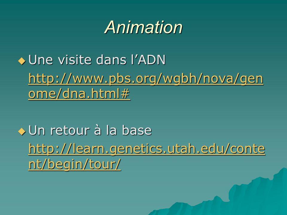 Animation Une visite dans lADN Une visite dans lADN http://www.pbs.org/wgbh/nova/gen ome/dna.html# http://www.pbs.org/wgbh/nova/gen ome/dna.html# Un retour à la base Un retour à la base http://learn.genetics.utah.edu/conte nt/begin/tour/ http://learn.genetics.utah.edu/conte nt/begin/tour/