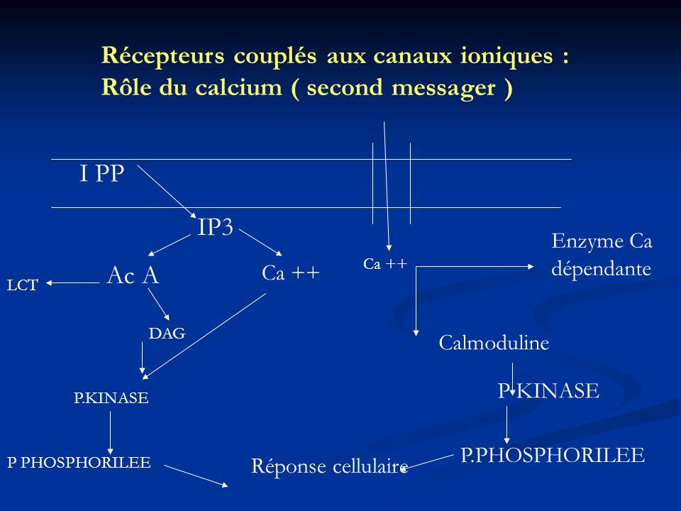 Récepteurs couplés aux canaux ioniques : Rôle du calcium ( second messager ) I PP IP3 Ac A DAG LCT Ca ++ P.KINASE P PHOSPHORILEE Ca ++ Enzyme Ca dépen