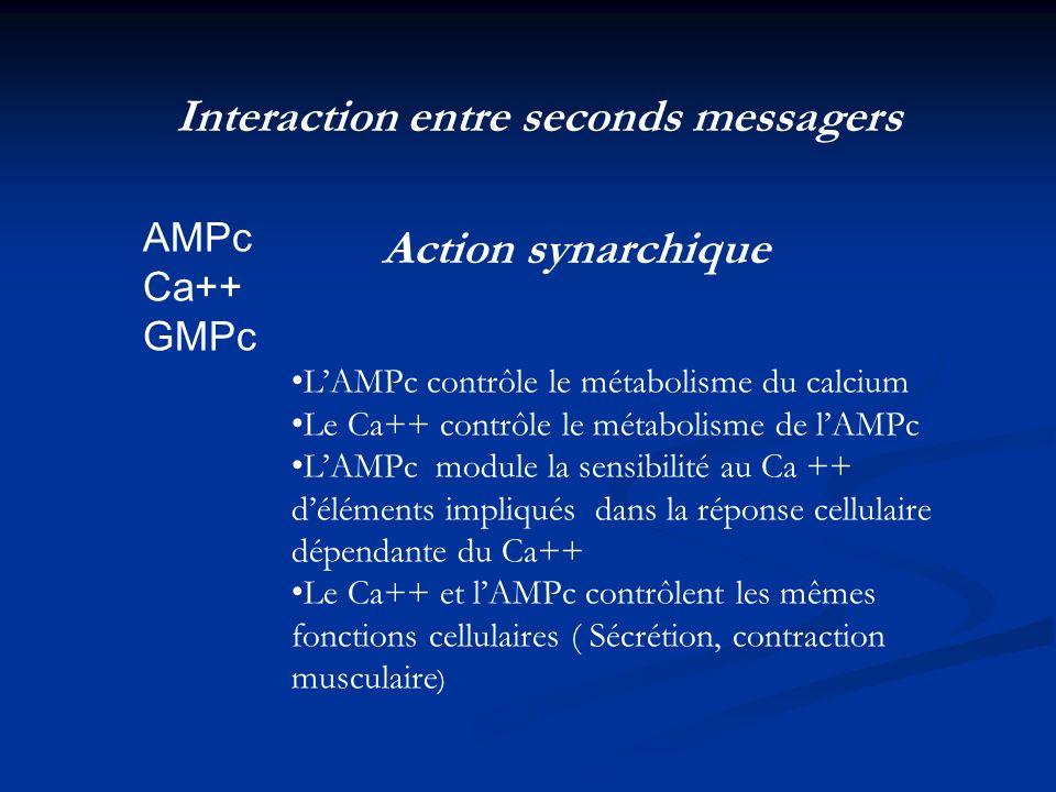 Interaction entre seconds messagers AMPc Ca++ GMPc Action synarchique LAMPc contrôle le métabolisme du calcium Le Ca++ contrôle le métabolisme de lAMP