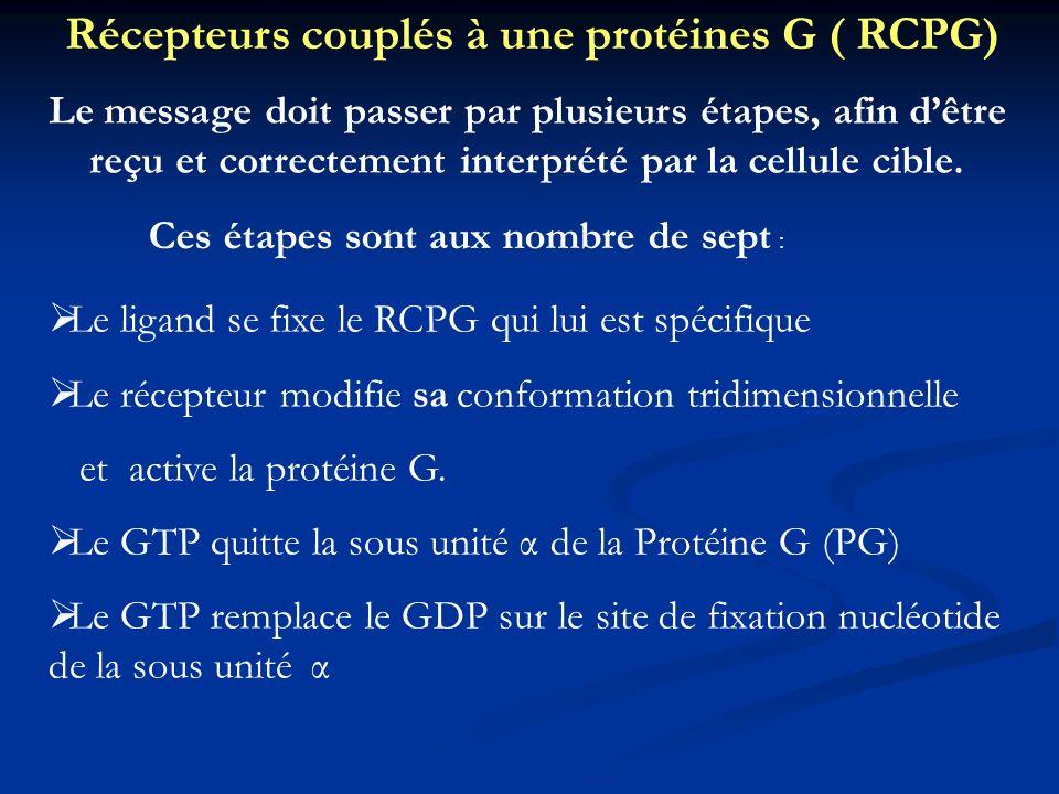 Récepteurs couplés à une protéines G ( RCPG) Le message doit passer par plusieurs étapes, afin dêtre reçu et correctement interprété par la cellule ci