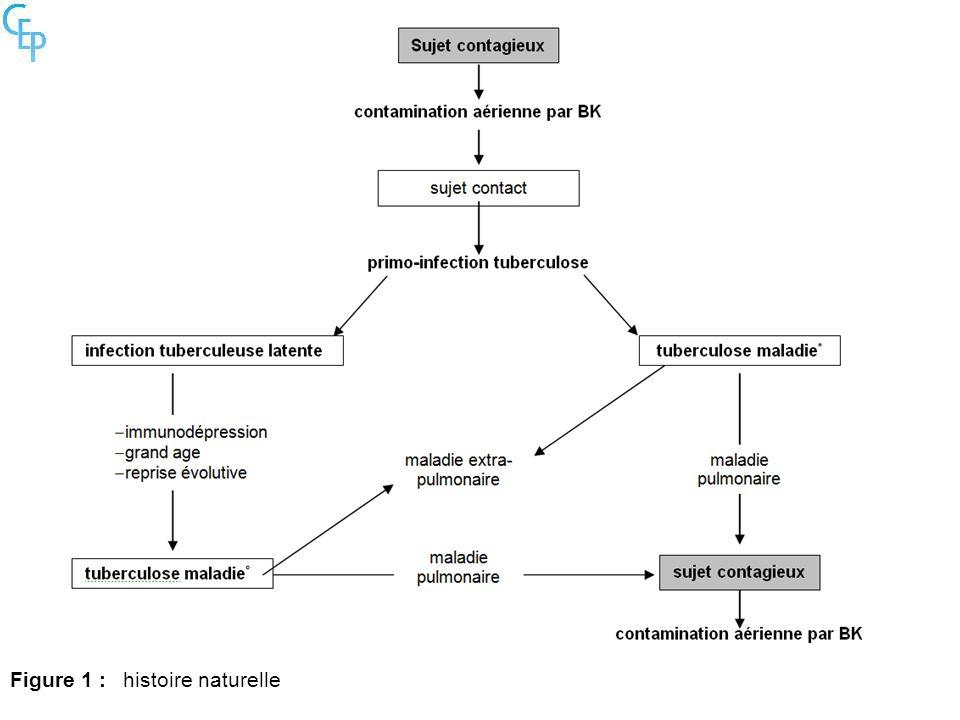 Figure 1 :histoire naturelle