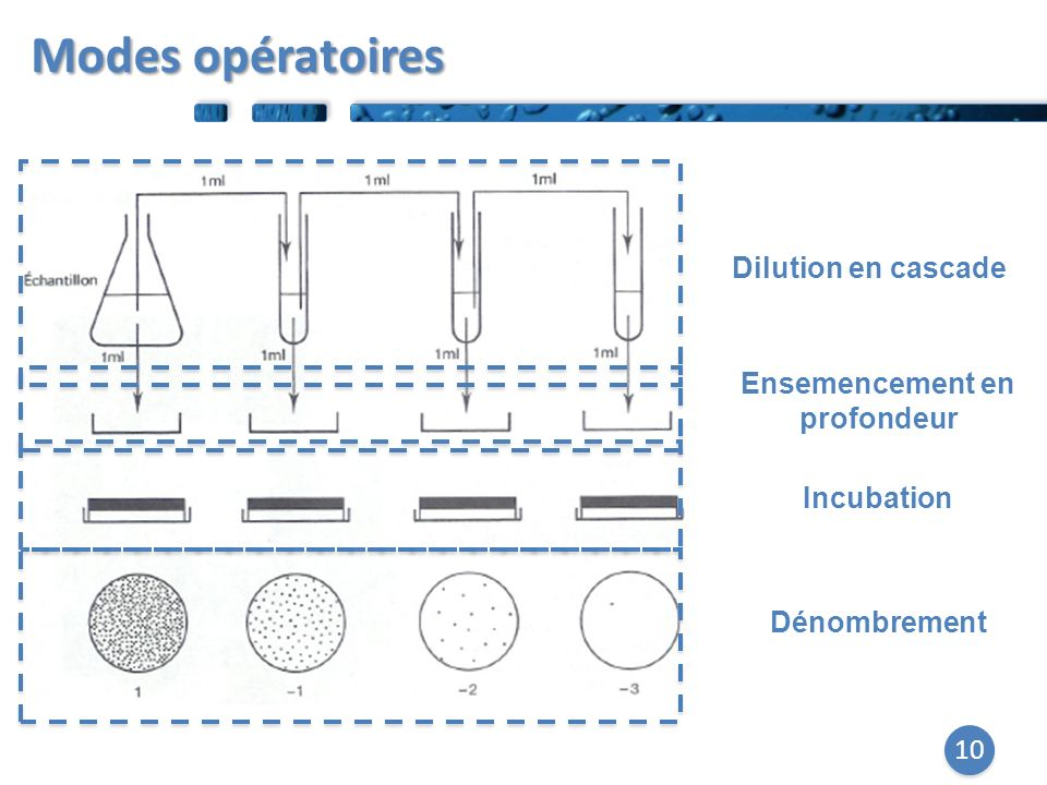 10 Dilution en cascade Ensemencement en profondeur Incubation Dénombrement