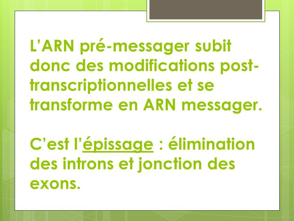 LARN pré-messager subit donc des modifications post- transcriptionnelles et se transforme en ARN messager. Cest lépissage : élimination des introns et