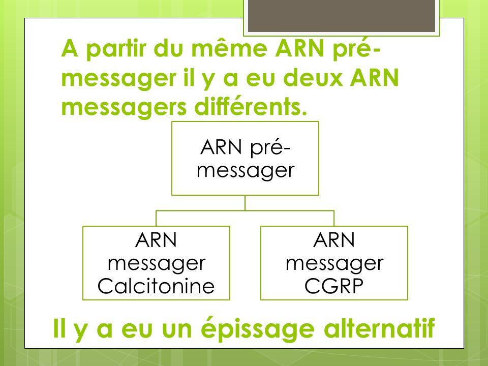 A partir du même ARN pré- messager il y a eu deux ARN messagers différents. ARN pré- messager ARN messager Calcitonine ARN messager CGRP Il y a eu un