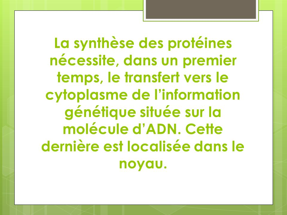La synthèse des protéines nécessite, dans un premier temps, le transfert vers le cytoplasme de linformation génétique située sur la molécule dADN. Cet