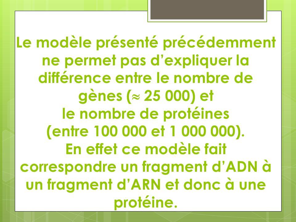 Le modèle présenté précédemment ne permet pas dexpliquer la différence entre le nombre de gènes ( 25 000) et le nombre de protéines (entre 100 000 et