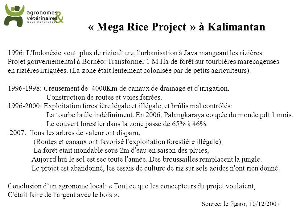 « Mega Rice Project » à Kalimantan 1996: LIndonésie veut plus de riziculture, lurbanisation à Java mangeant les rizières. Projet gouvernemental à Born