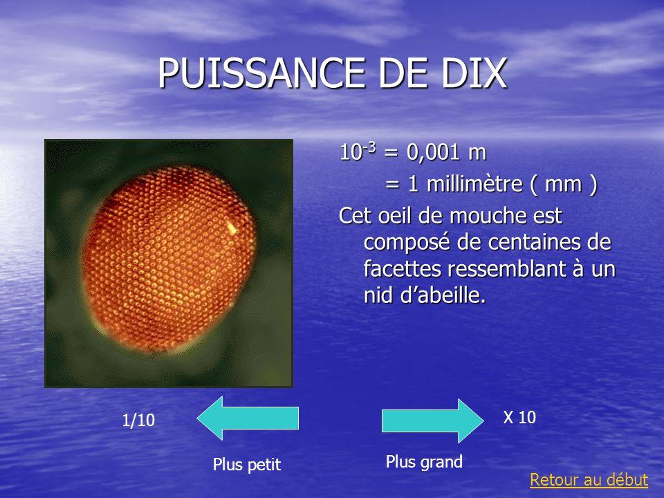 PUISSANCE DE DIX 10 -3 = 0,001 m = 1 millimètre ( mm ) = 1 millimètre ( mm ) Cet oeil de mouche est composé de centaines de facettes ressemblant à un