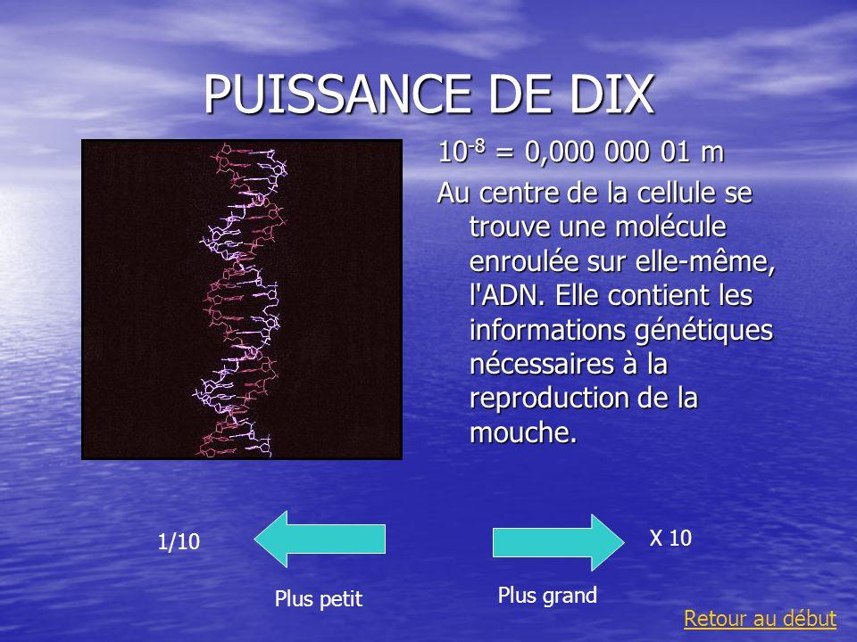 PUISSANCE DE DIX 10 -8 = 0,000 000 01 m Au centre de la cellule se trouve une molécule enroulée sur elle-même, l'ADN. Elle contient les informations g