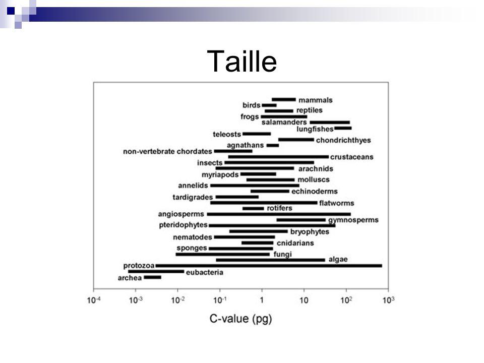 Quelques génomes Organisme (Règne)Taille (pb)Gènes Bactériophage (Virus) 5 x10 4 ~ 60 E.