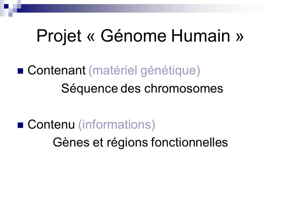 Cellule Noyau Chromosome ADN Matériel génétique